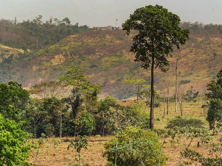 Câmara aprova PL que praticamente acaba com exigência de licenciamento ambiental no Brasil