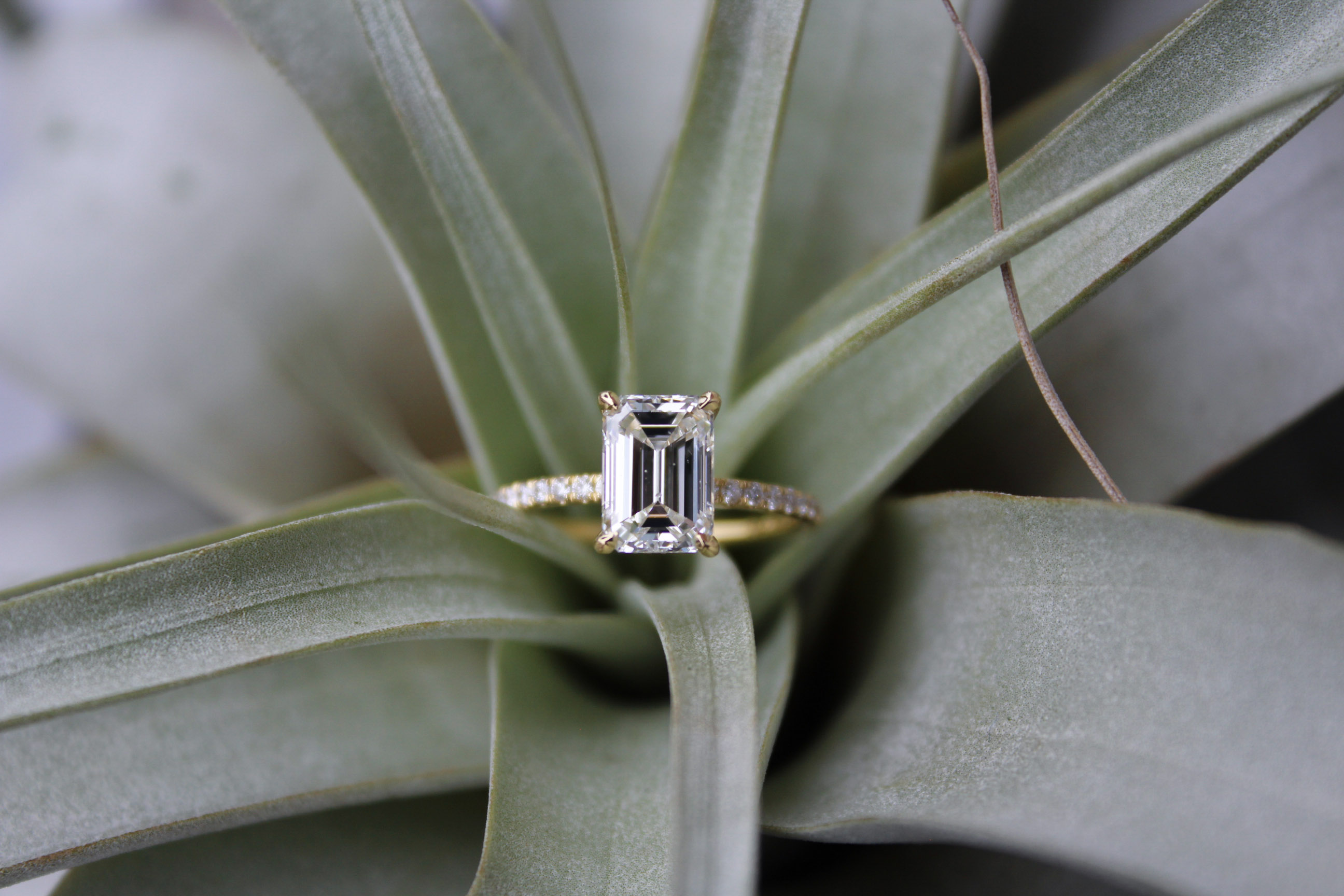 AJ Custom Engagement Ring