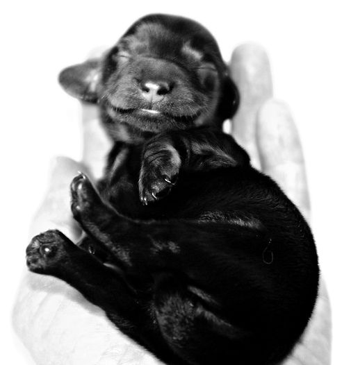 Moxie 3 days old_7.JPG