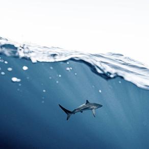 Coastal shark demise in South America intensifies