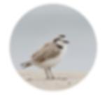 Screen Shot 2020-06-24 at 4.46.10 PM.png