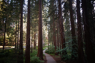 forest-nature-path-1841777.jpg