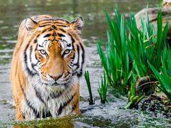 CSI: Wildlife – Forensics and the Illegal Wildlife Trade