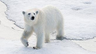 tagged_bear.width-1500.jpg