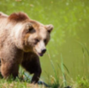 animal-bear-cute-162340.jpg