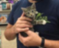 Volunteer holding kitten at adoption event
