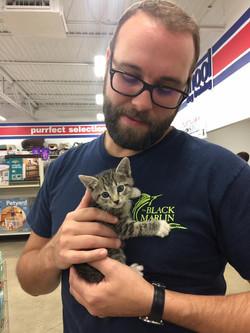 10/1/17 - Blue Eyed Tabby Kitten