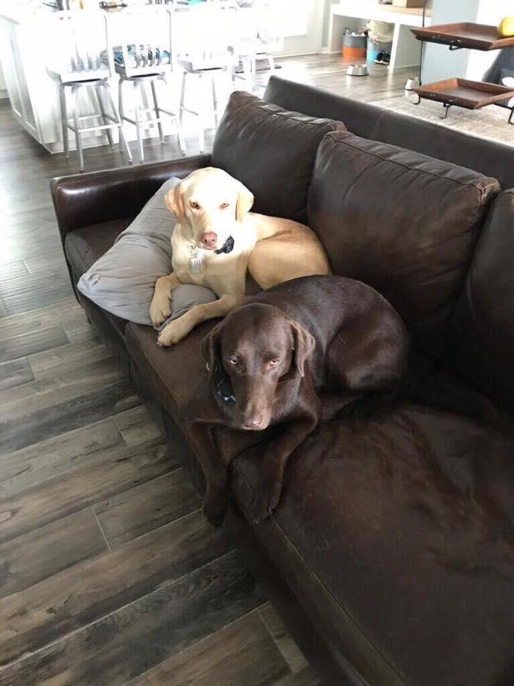 10/8/17 - Rocky & Bella