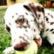 puppy4a.jpg