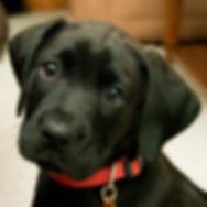 puppy5a.jpg