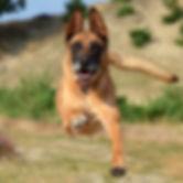 dog18d.jpg