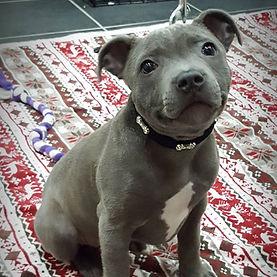 puppy13.jpg