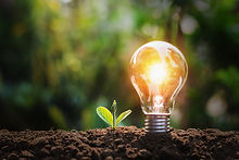 lightbulb-with-small-plant-soil-sunshine