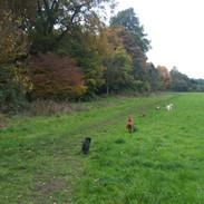 Dog walkies
