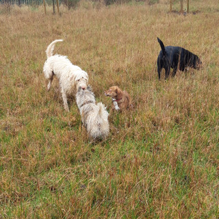 Dogs enjoying countryside