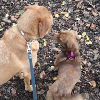 Puppy love?!