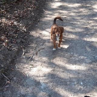 Dog walk time!