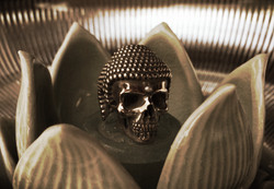 skull07.jpeg
