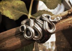 snake05.jpeg