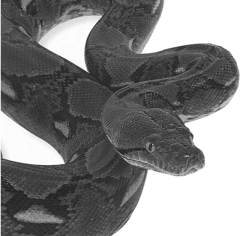 snake hijiri silver works
