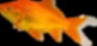 goldfish-food.png