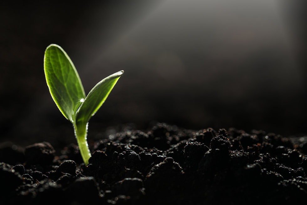 Young vegetable seedling growing in soil against dark background, space for text.jpg