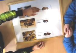 Ateliers scolaires abeilles & pollinisateurs
