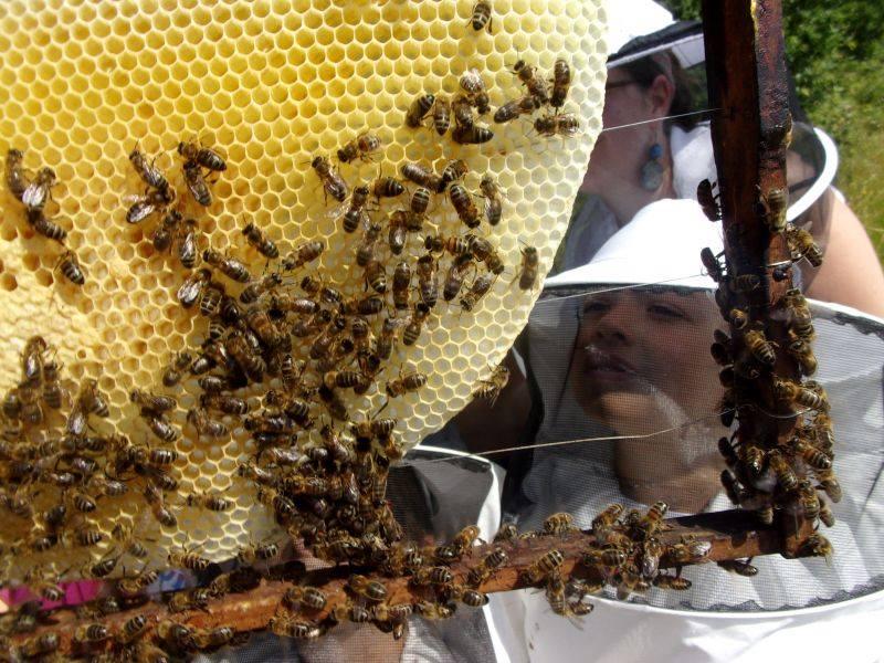 Sortie Nature avec les abeilles