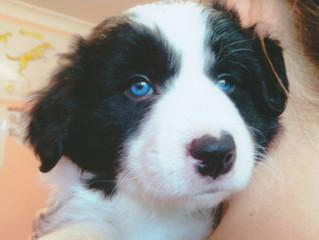 Puppies! Need I say more...