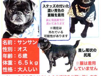 ワンちゃんを探しております、笹塚・幡ヶ谷お散歩中かもしれません。どうぞ宜しくお願い致します。