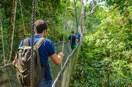 Canopy Walk Kinabalu Park