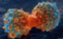 cancer cells dividing.jpg