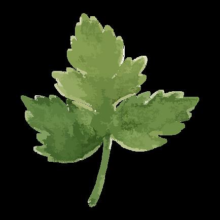 Prezzemolo Leaf