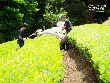新米茶農家 茶畑奮闘記!その1