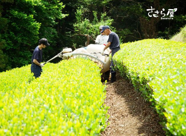 新米茶農家 奮闘記