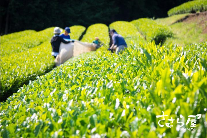 茶農家奮闘記