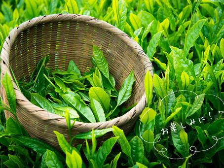 2019年度の新茶予約販売開始