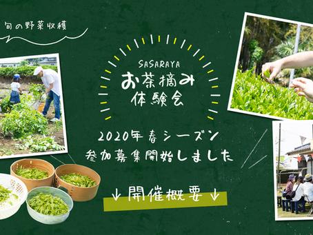 【中止】2020年 春のお茶摘み体験会 募集開始