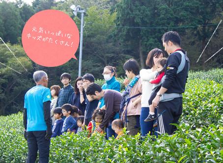 秋のお茶摘み体験会終了!