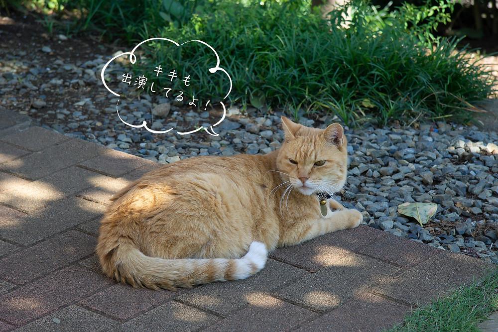 入間ケーブルテレビ出演 看板猫のキキ