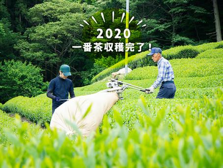 2020年 一番茶の収穫が終わりました!