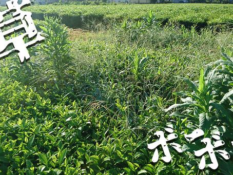 続:雑草との戦い/夏の陣