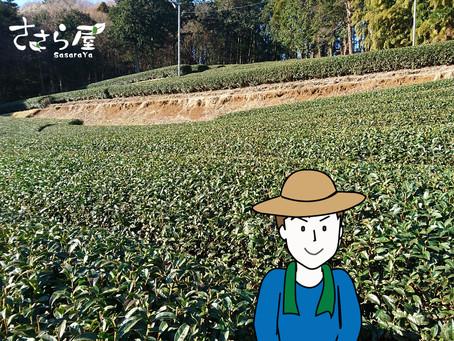 新米茶農家 茶畑奮闘記!その3
