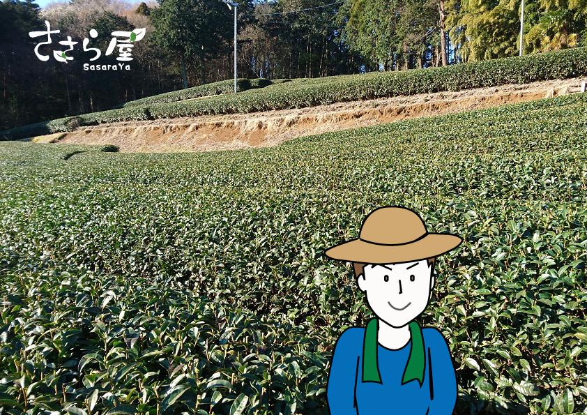 茶農家 奮闘記 ささら屋 狭山茶