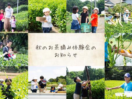 狭山茶農家 ささら屋 秋のお茶摘み体験会のお知らせ