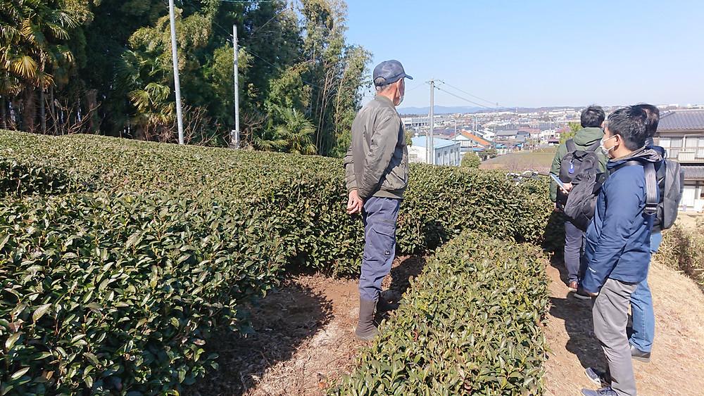 茶畑案内の様子