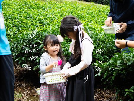 秋のお茶摘み体験会開催!