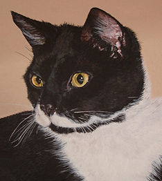 Painting of black and white cat  photo