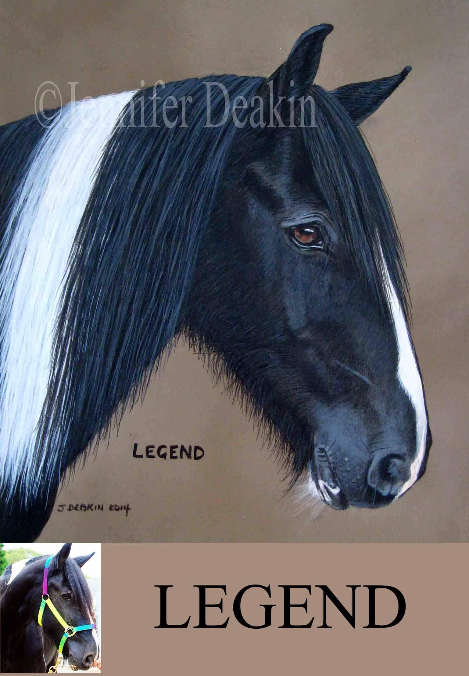 colouredhorse