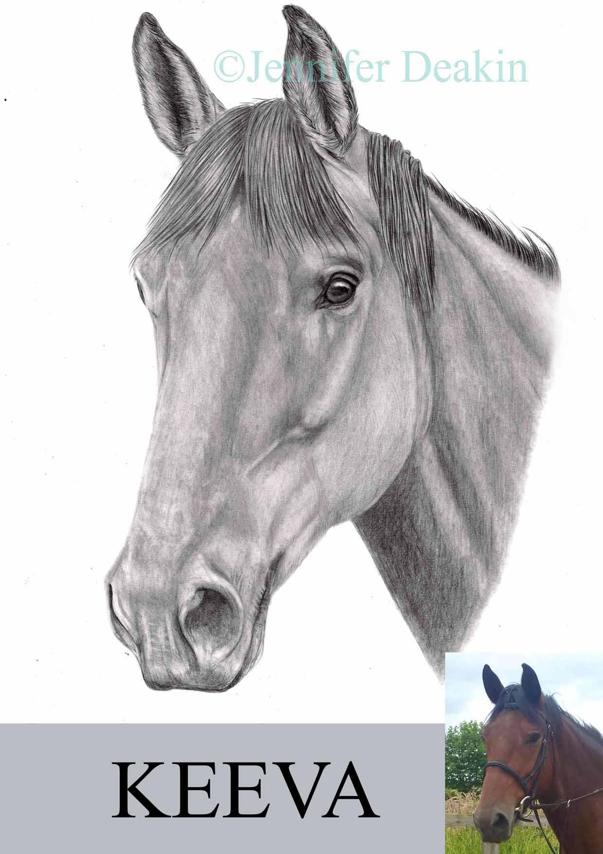 bayhorse2